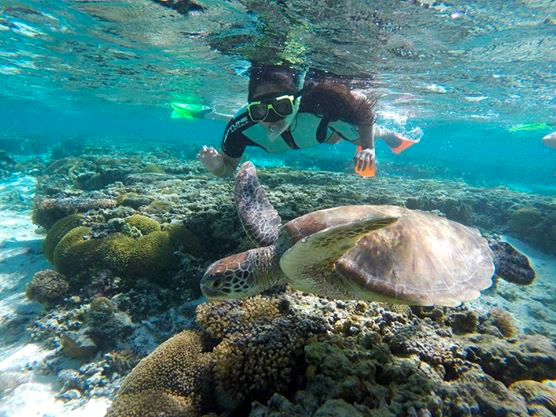 Snorkeler with Turtle